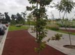 Parques del Bosque DEpartamentos Rena (4)